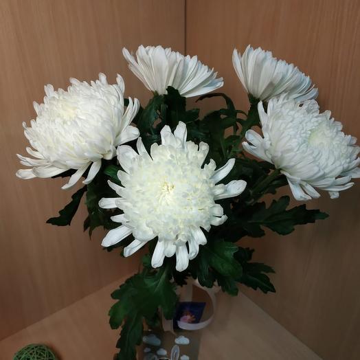 5 Одиночных хризантем
