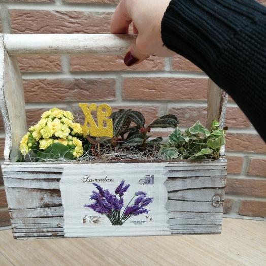 Горшечный микс в ящике: букеты цветов на заказ Flowwow