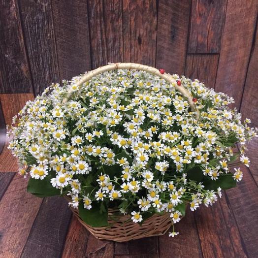 101 ромашка в корзине: букеты цветов на заказ Flowwow
