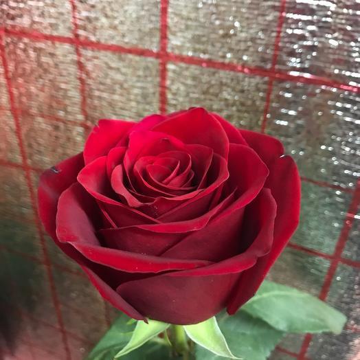 Роза голландская (80см)