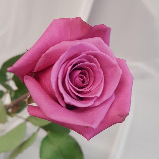 Роза Эквадор 50 см