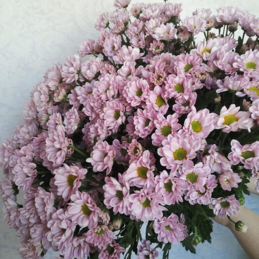 Букет из 25 кустовых хризантем Сантини