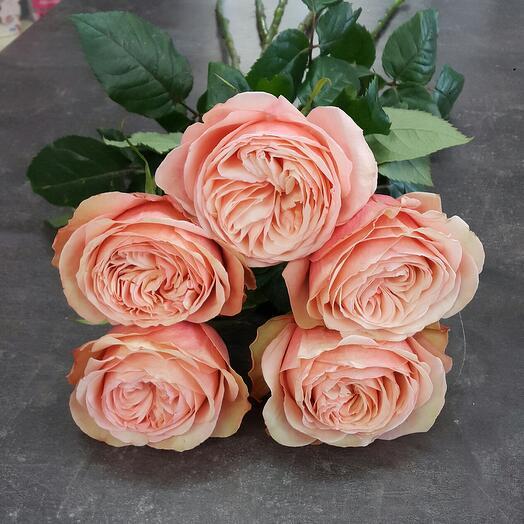 Букет розы пионовидные 5 шт