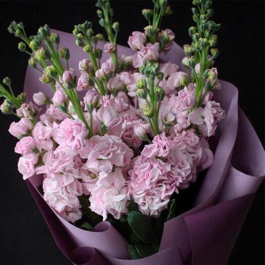Розовая ароматная маттиола