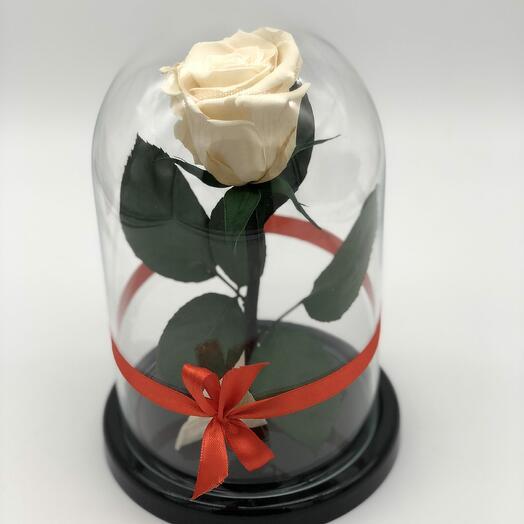 Роза в Стеклянно Колбе Кремовая Мини