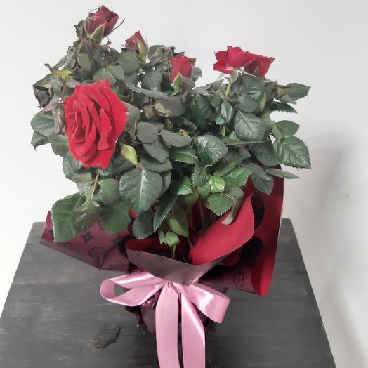 Роза патио цвет разный