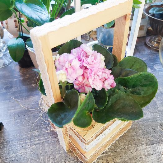 Чудесная фиалочка в кашпо ручной работы: букеты цветов на заказ Flowwow