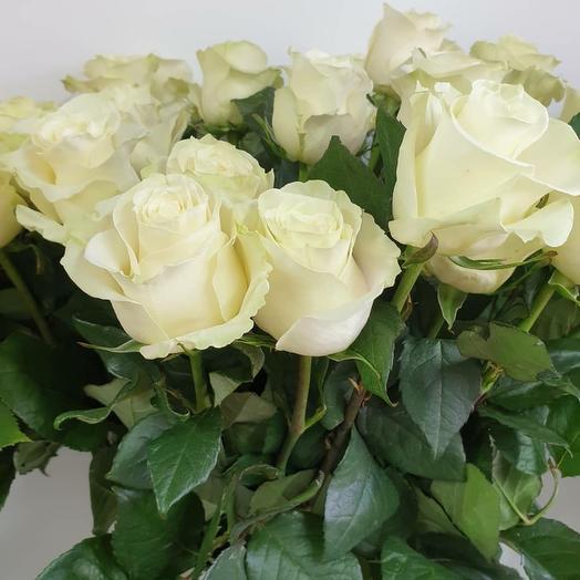 Роза белая Мондиаль(60см)