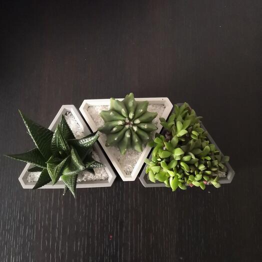 Набор растений в кашпо