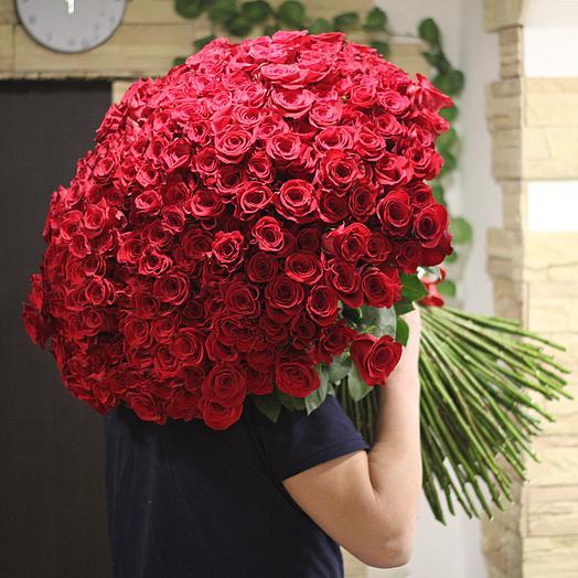 251 эквадосркая роза длинной 70 см: букеты цветов на заказ Flowwow