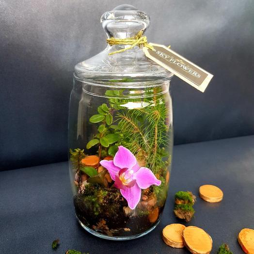 """Флорариум """"Изящный сад"""": букеты цветов на заказ Flowwow"""