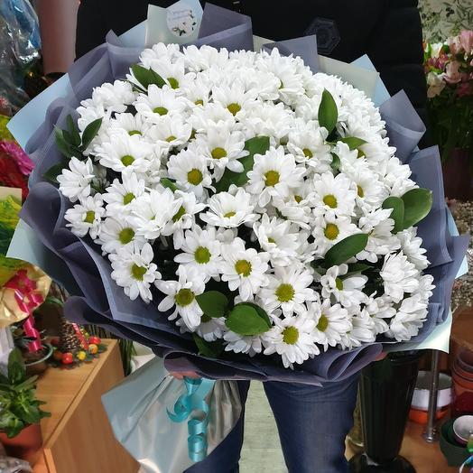 хризантемы ромашки