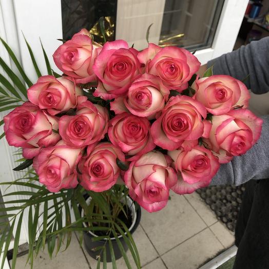 Роза 15