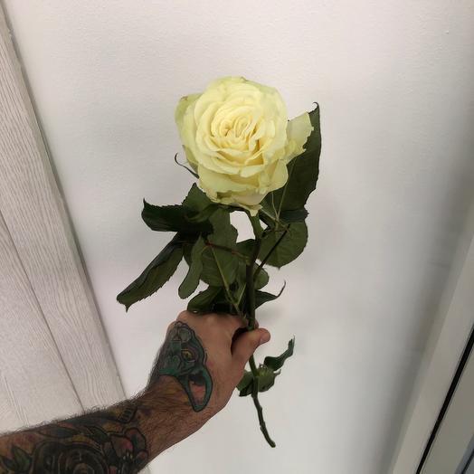 Роза Белая Мондиаль 70 см