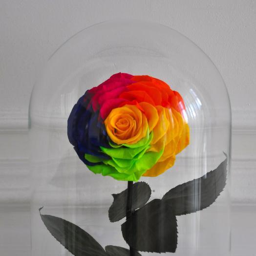 RAINBOW РАЗНОЦВЕТНАЯ РОЗА В КОЛБЕ KING SIZE: букеты цветов на заказ Flowwow