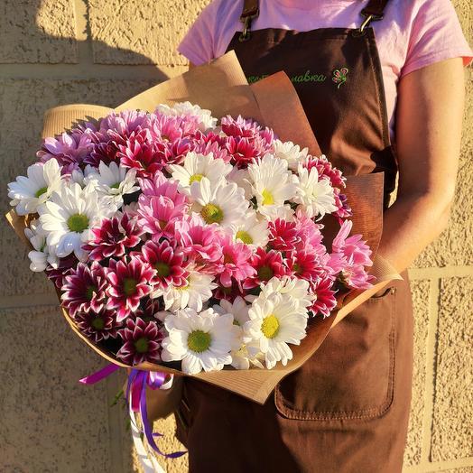 15 chrysanthemum mix