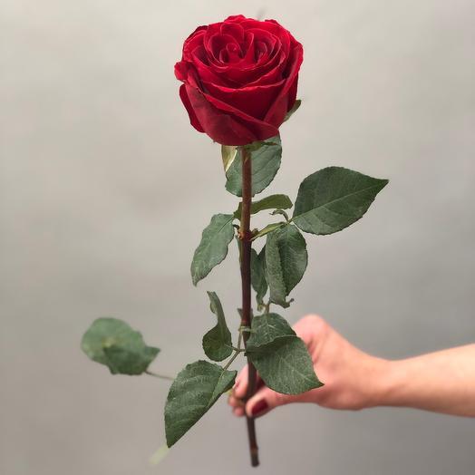 Роза Кения 45 см