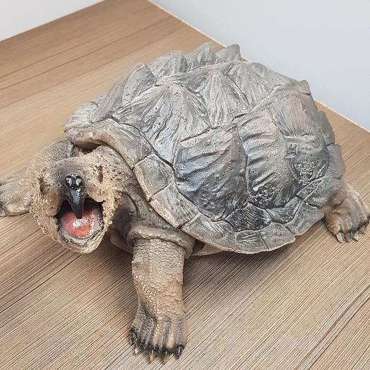 Черепаха 40/30
