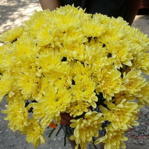 Букет из 21 желтой хризантемы кустовой: букеты цветов на заказ Flowwow