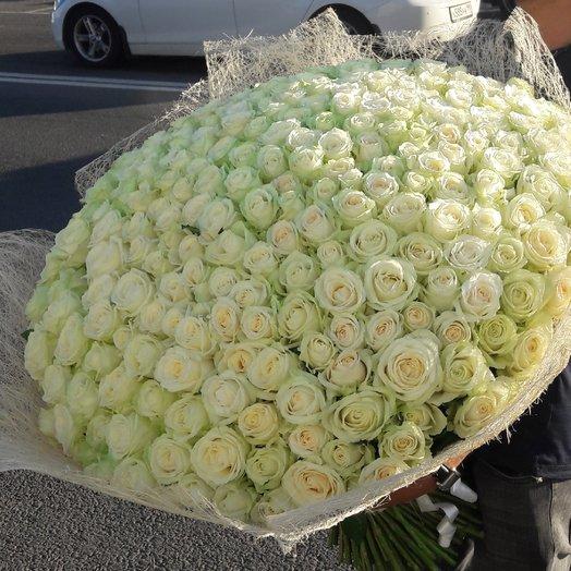 Букет из 303 одной голландский роза: букеты цветов на заказ Flowwow