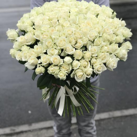 151 роза белая
