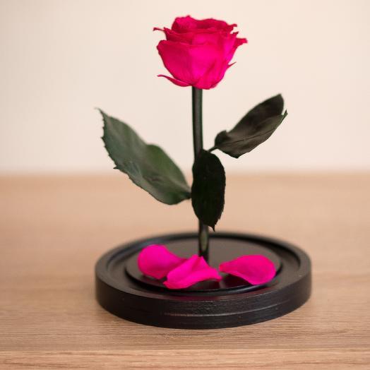 Роза в колбе Мини фуксия: букеты цветов на заказ Flowwow
