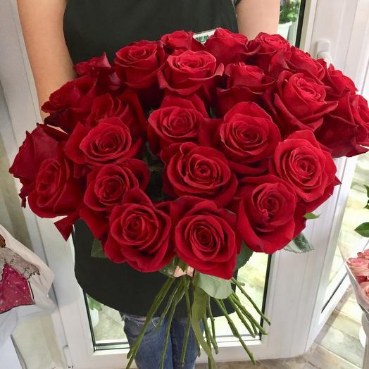 Роза красная королевская