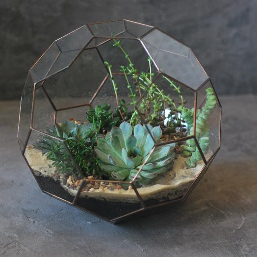 Флорариум геометрический с суккулентами