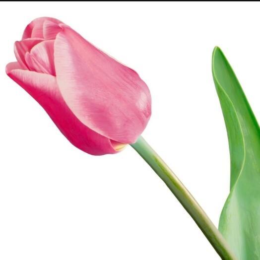 ✅ Тюльпан розовый хрустящий (кол-во любое)