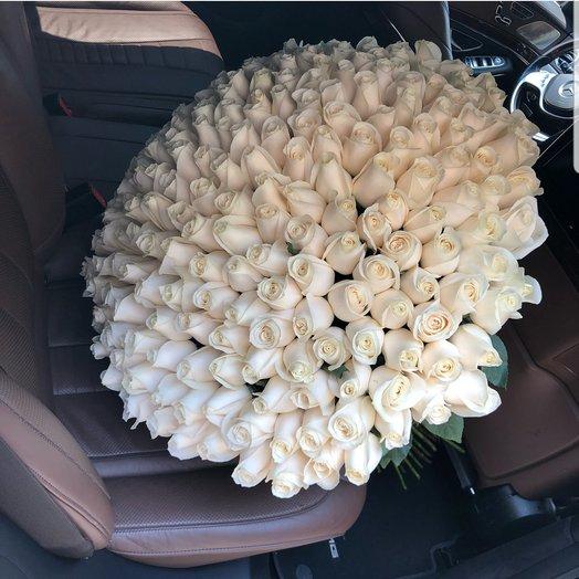 201 роза Эквадор 70см. белый крем: букеты цветов на заказ Flowwow
