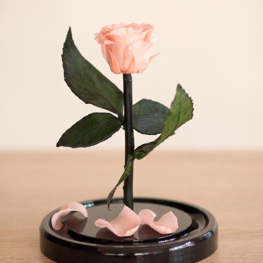Роза в колбе Мини Мини персиковая: букеты цветов на заказ Flowwow