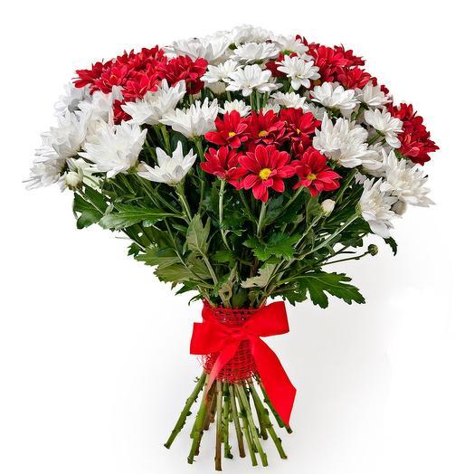 Красные и белые кустовые хризантемы