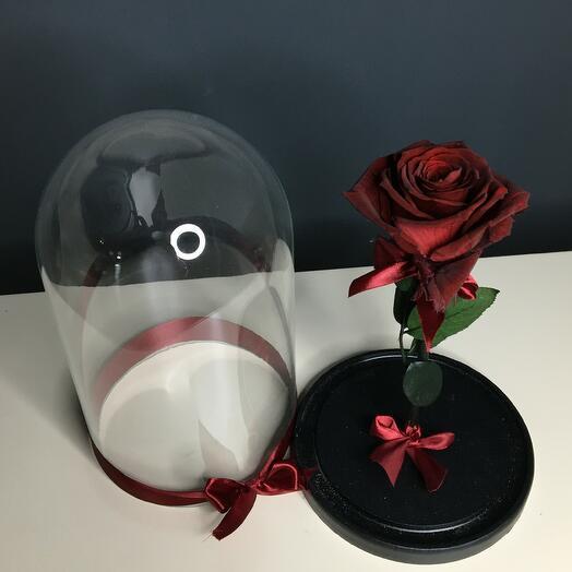 Роза бордовая ( бутон до 6 см)