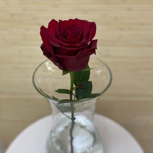 Роза Эксплорер 80 см