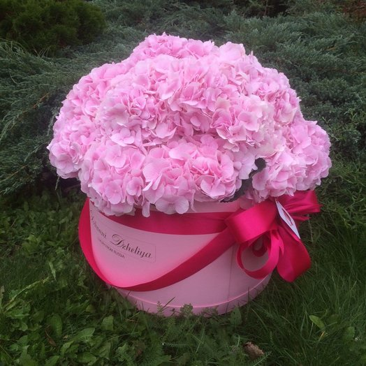 Гортензии нежно-розовые в розовом цилиндре - Оригинальное исполнение 25 шт: букеты цветов на заказ Flowwow