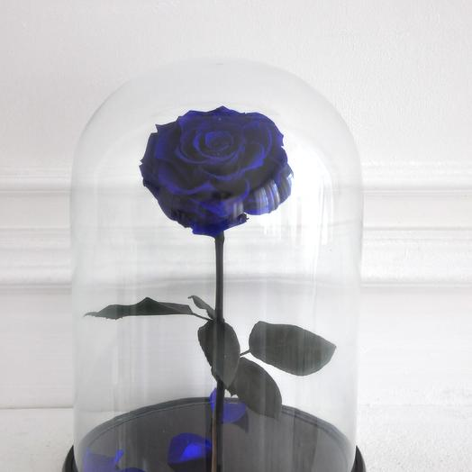 BLUE MARLIN, СИНЯЯ РОЗА В КОЛБЕ KING SIZE: букеты цветов на заказ Flowwow