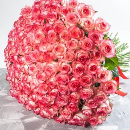 Роза 75