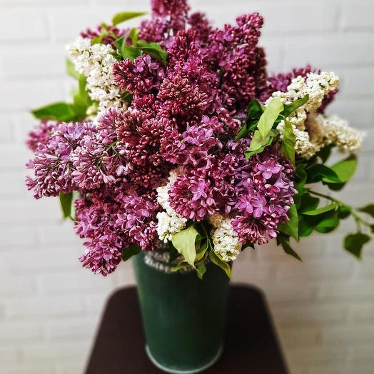 Букет сирени в декоративной вазе: букеты цветов на заказ Flowwow