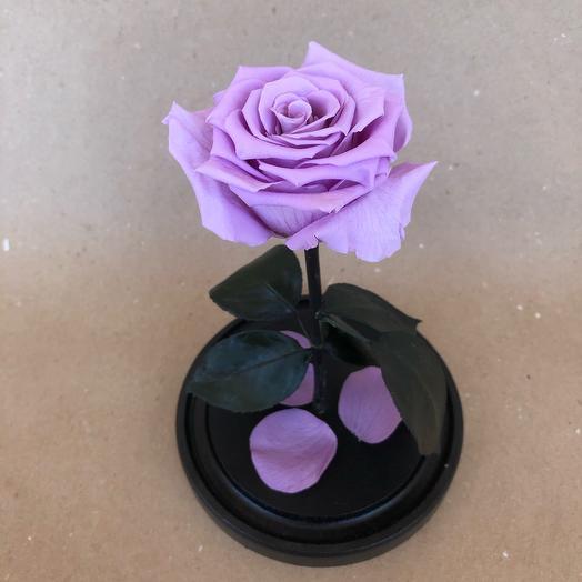Роза в колбе Standart сиреневая