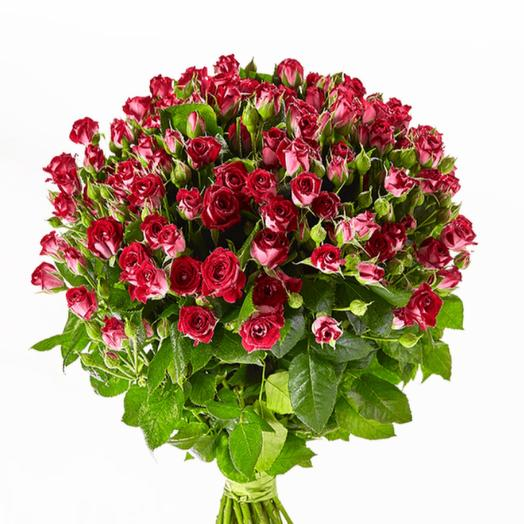 Кустовая Роза БиБаблс   50 см