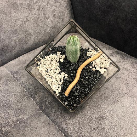 Florarium with cactus