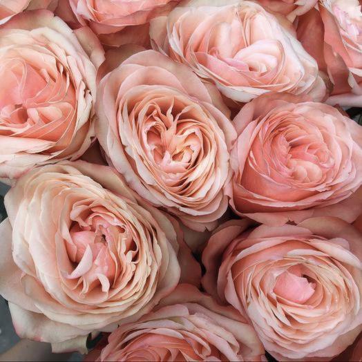 Роза Cahala: букеты цветов на заказ Flowwow