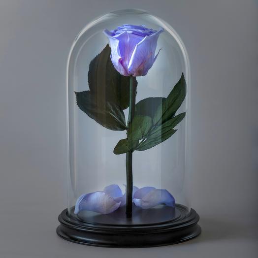 Роза в колбе сиреневая премиум