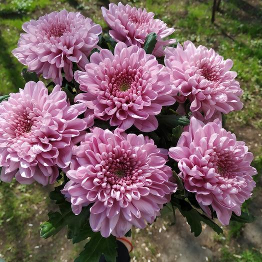 Шарлотта 2: букеты цветов на заказ Flowwow