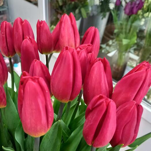 Тюльпан красный 1шт