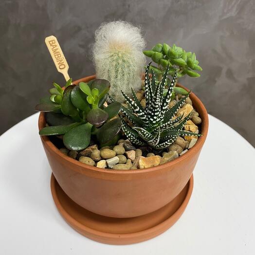 Садик из кактусов и суккулентов в керамическом кашпо