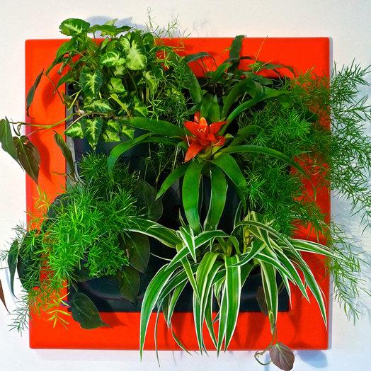 Фитокартина Зеленая: букеты цветов на заказ Flowwow