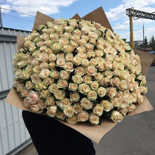 201 кремовая роза