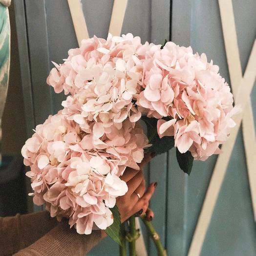Розовые гортензии: букеты цветов на заказ Flowwow