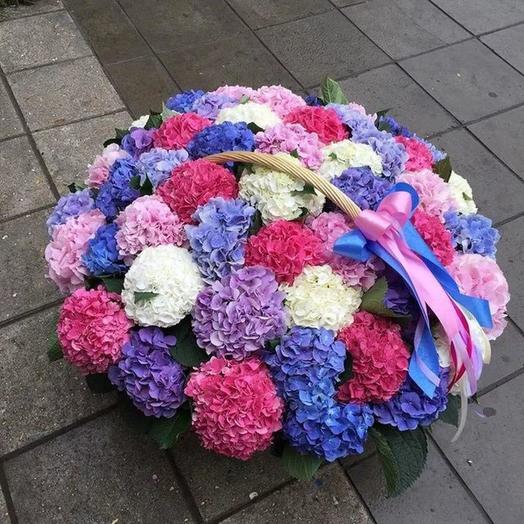 Гортензии микс в корзине 75 шт: букеты цветов на заказ Flowwow